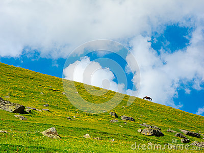 Horse grazing in a mountain meadow