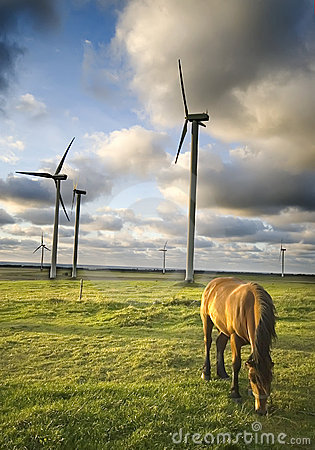 Horse grazing near windmills