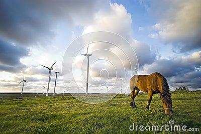 Horse grazing near windmills