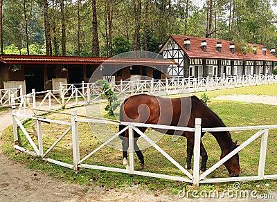 Horse grazing in outdoor paddock
