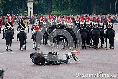 Horse guard fall Editorial Image