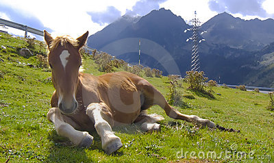 Horse having a rest at the Pyrenees
