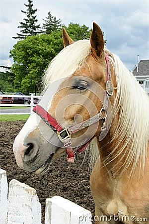 Free Horse Head Stock Photography - 10114622