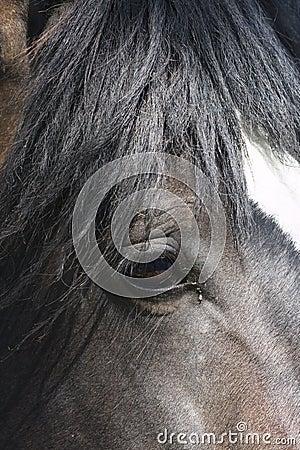Free Horse Head Royalty Free Stock Photos - 20704558