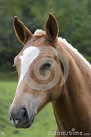 Horse Head Stock Image Image 5971041