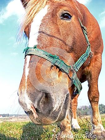Free Horse Head Close-up Royalty Free Stock Image - 7288706