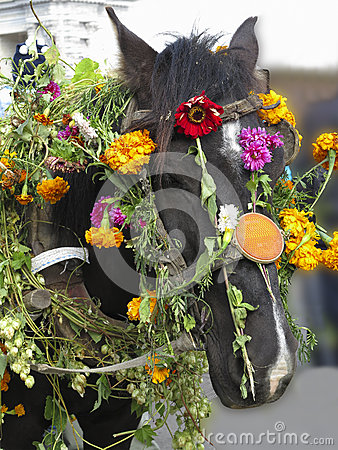 Horse Head Decorated With Flowers For Festival Stock
