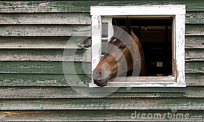 Horse Head Sticking Out Of Barn