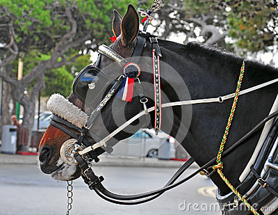 Horse head at work