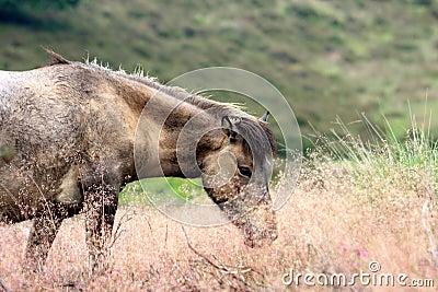 A horse between the high flowering grass