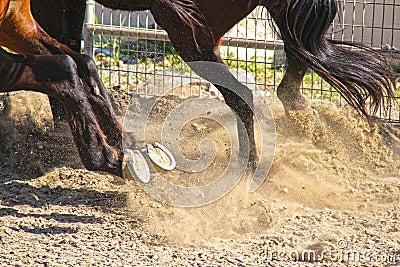 Horse hoof explosion.