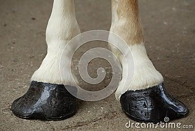 Horse Hooves