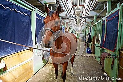 Horse in horse barn