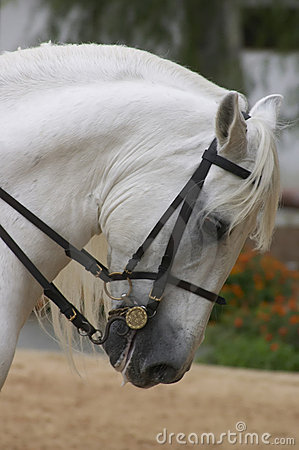 Free Horse In Andalusia, Spain Stock Photo - 1627550