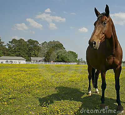 Free Horse In Field Royalty Free Stock Photography - 5302277