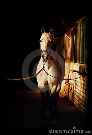 Free Horse In Stable Stock Photos - 4315843