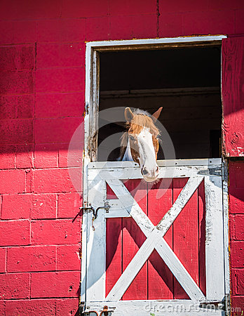 Free Horse In Stable Royalty Free Stock Photography - 47427617