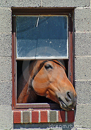 Free Horse In The Window Royalty Free Stock Images - 4049