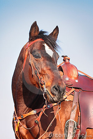 Free Horse In Western Equipment Royalty Free Stock Photography - 13834997