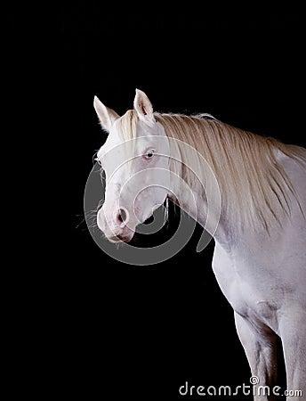 Horse indoors