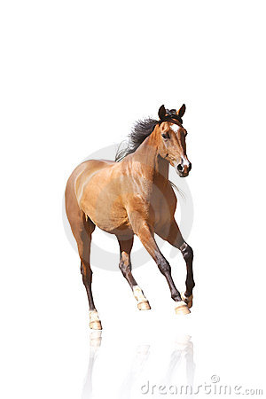 Free Horse Isolated Royalty Free Stock Photography - 12135617