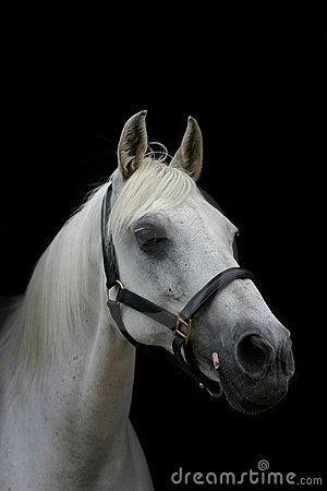 Horse isolated against black