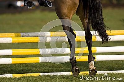 Horse Jumping 001