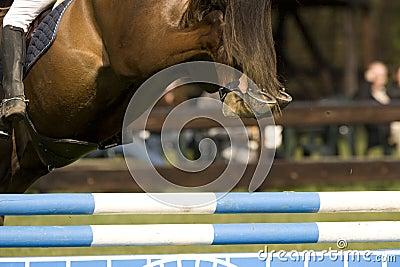 Horse Jumping 004