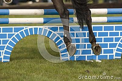 Horse Jumping 005
