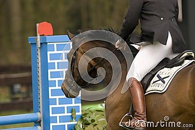 Horse Jumping 006