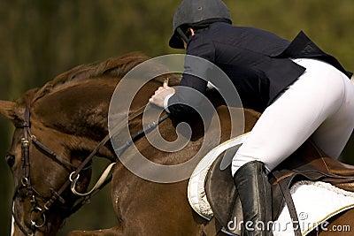 Horse Jumping 010