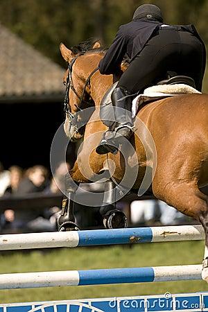 Horse Jumping 017