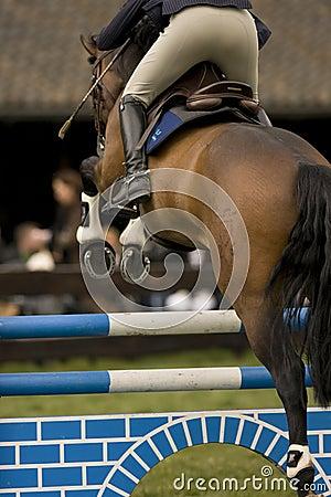 Horse Jumping 020