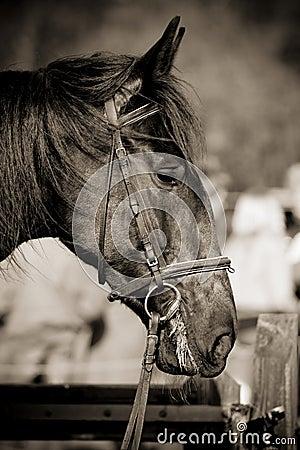 Horse Jumping 031