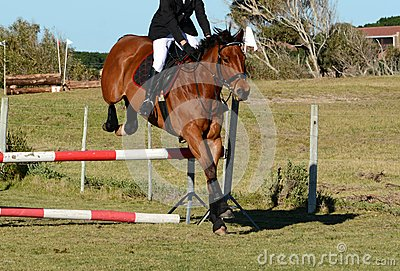 Horse jumping a jump