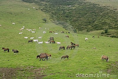 Horse landscape in green meadow Pyrenees