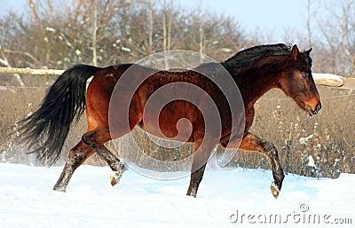 A horse at liberty