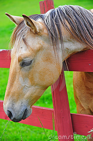 Free Horse Looking For Greener Pastures Royalty Free Stock Photos - 19801668
