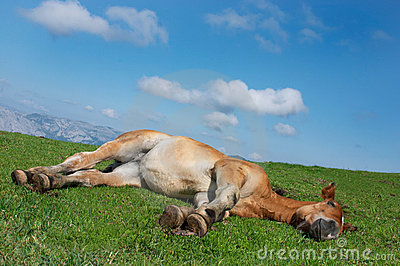 Horse lying in the grass
