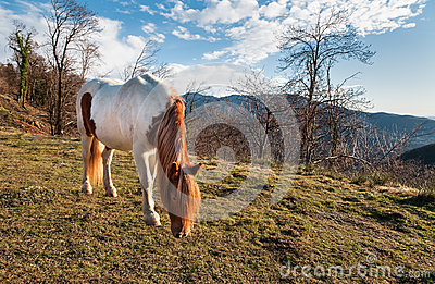 Horse in the meadow mountain