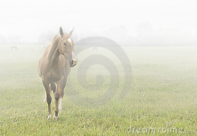 Horse in the mist