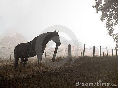 Horse in a misty morning pasture