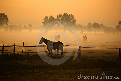 Horse in morning fog