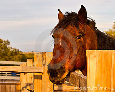 Horse named Red