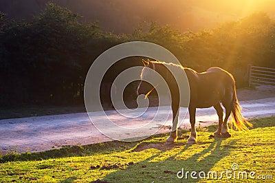 Horse near a road