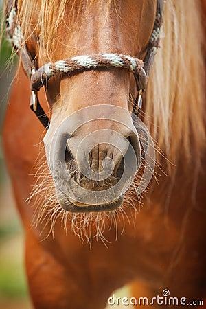 Free Horse Nose Royalty Free Stock Photos - 21511648