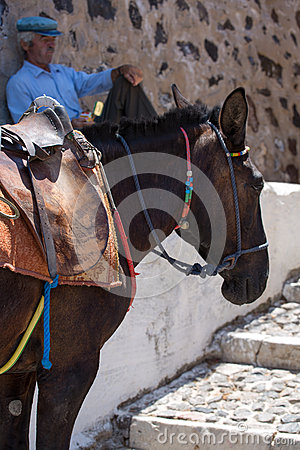 Horse and Old man sitting quietly against a wall Editorial Stock Image