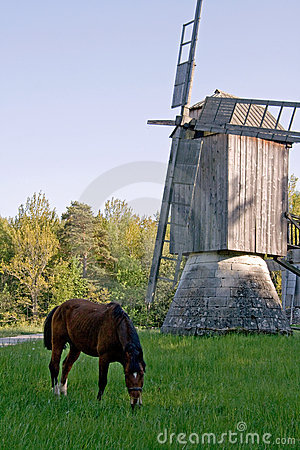 Horse and old windmill