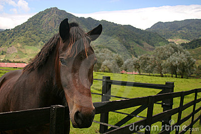 Horse over a fence