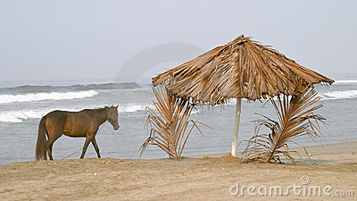 Horse and palapa on the beach